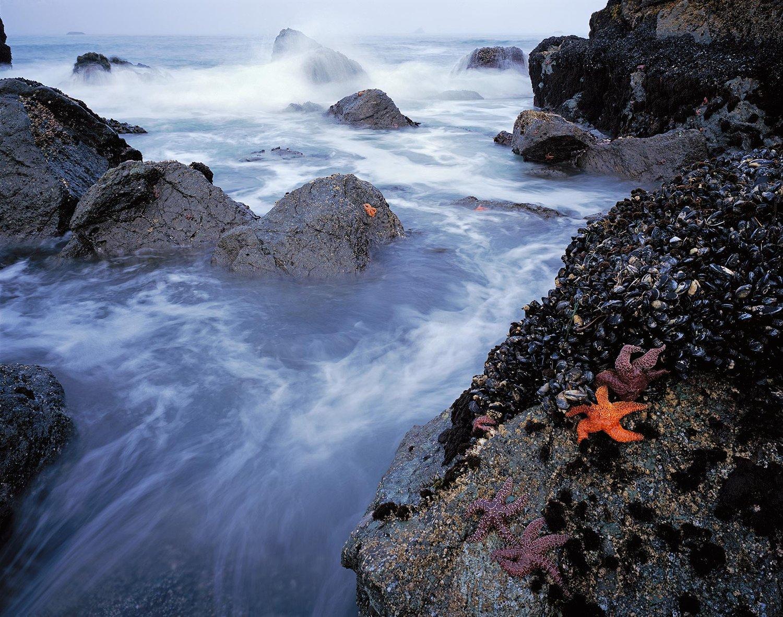 Image of Starfish & Surf, Samuel Boardman State Park, Oregon