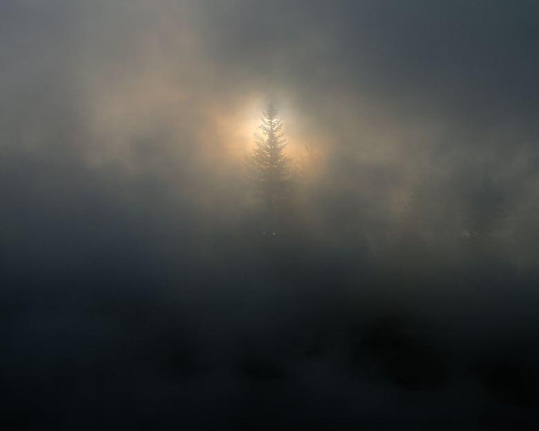 Image of Shining Through, Yellowstone National Park, Wyoming