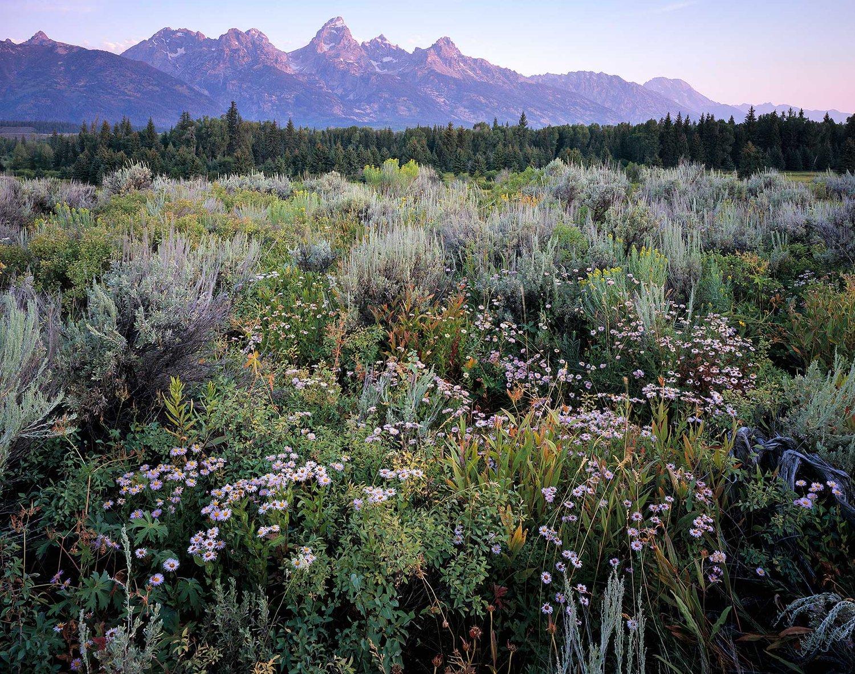 Image of Wildflowers & Grand Teton, Grand Teton National Park, Wyoming