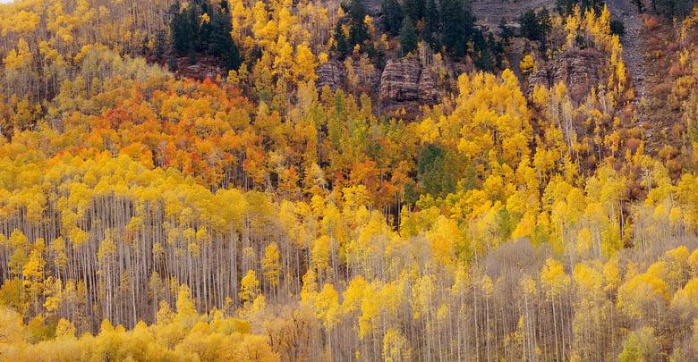 Image of  Hermosa Cliffs, Autumn, San Juan National Forest, Colorado