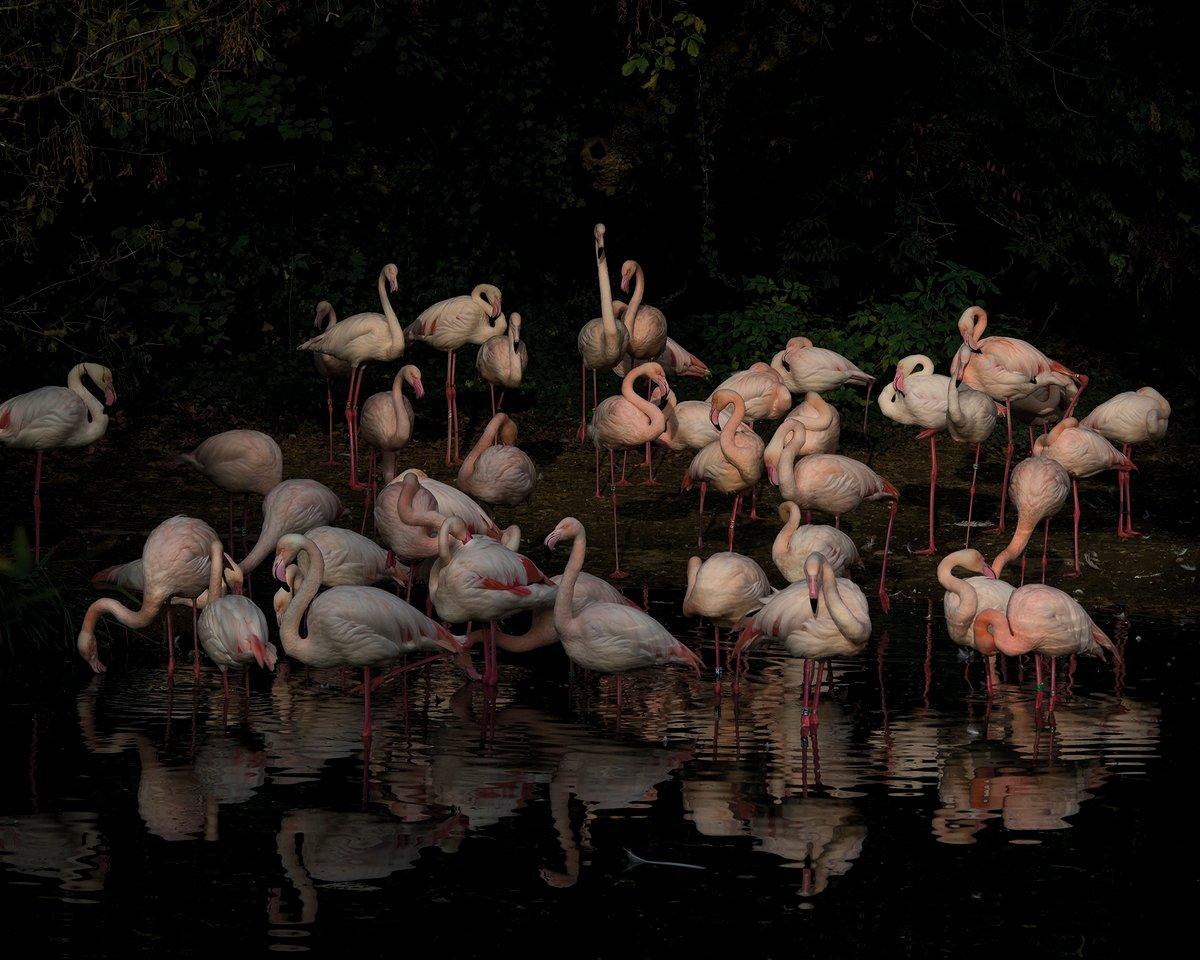 Image of flamingo_4