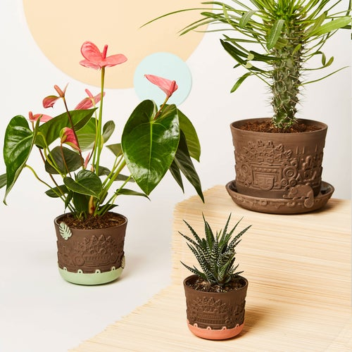Image of manoa flower pot M