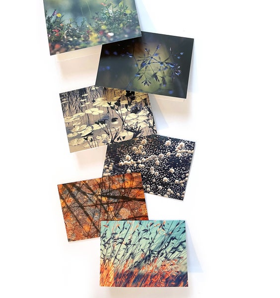 Image of Large greetings cards - pack of six original designs, barnacles, grasses, lichen, Scottish flora