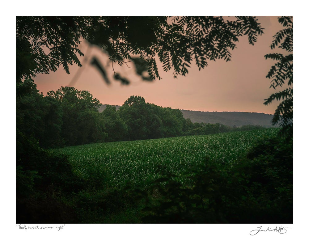 """Image of """"Thick Sweet Summer Night"""" Print"""