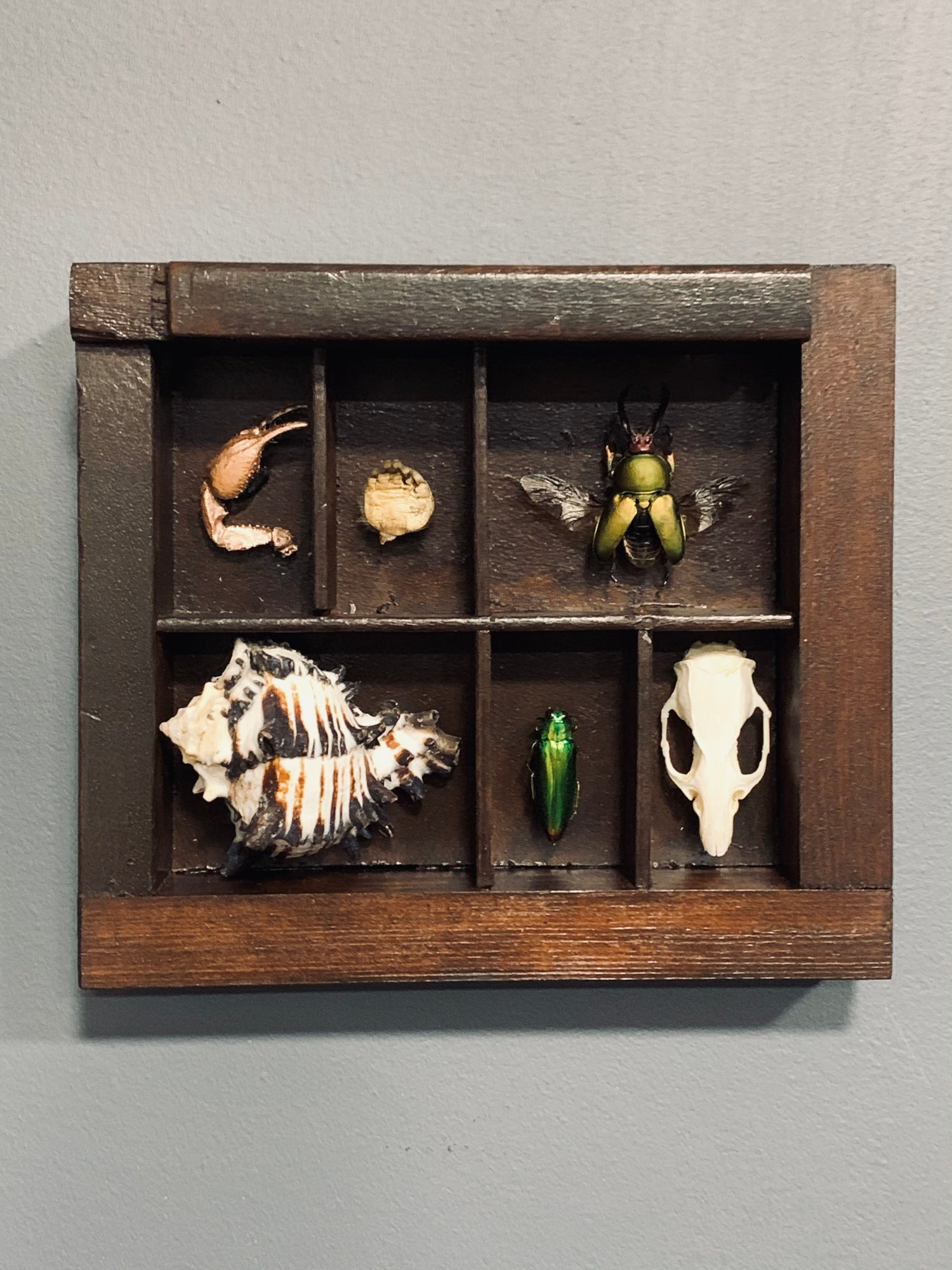 Cabinet of curiosities frame 1