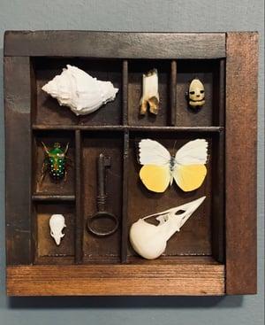 Cabinet of curiosities frame 4
