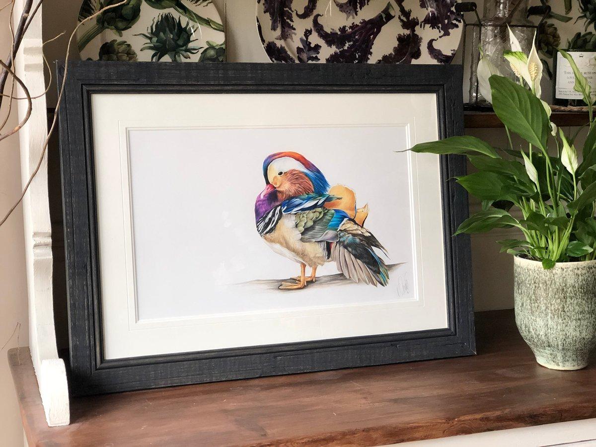 Image of Mandarin Duck - Original