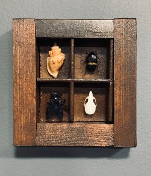 Cabinet of curiosities frame 6