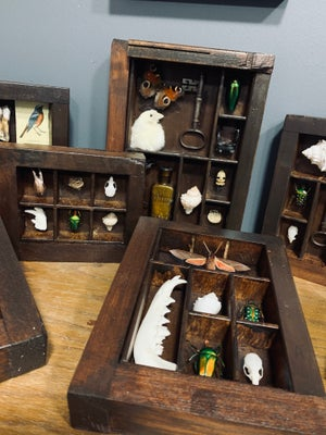 Cabinet of curiosities frame 7