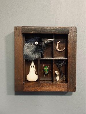 Cabinet of curiosities frame 8