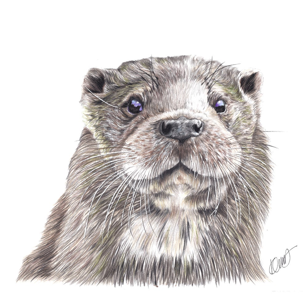 "Image of ""Ozzy the Otter"" Limited Edition Print"