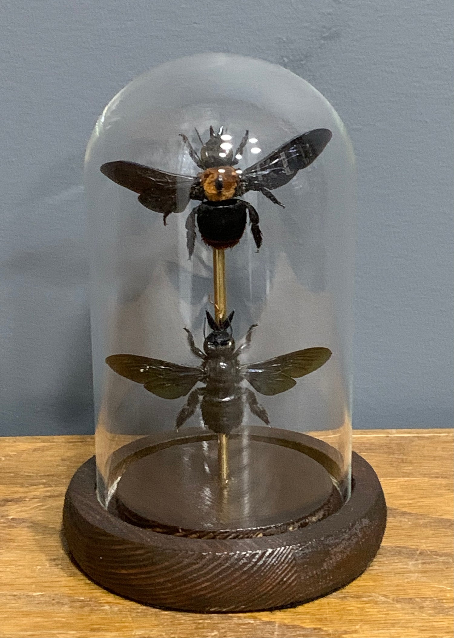 Set of two Carpenter bee