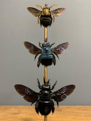 Carpenter bees set of three