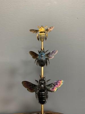 Set of three carpenter bees
