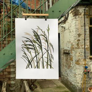 Image of Grasses