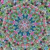 Transient Mandala