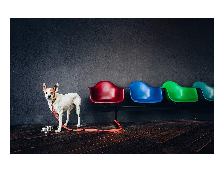 Image of Doggo | Gallery Print on Acrylic Glas