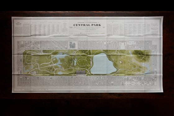 Image of Central Park Squirrel Census 'Terrestrial' Map
