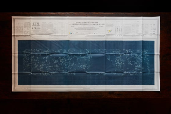 Image of Central Park Squirrel Census 'Celestial' Map