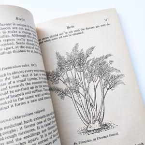 The Vegetable Garden - Penguin Handbook