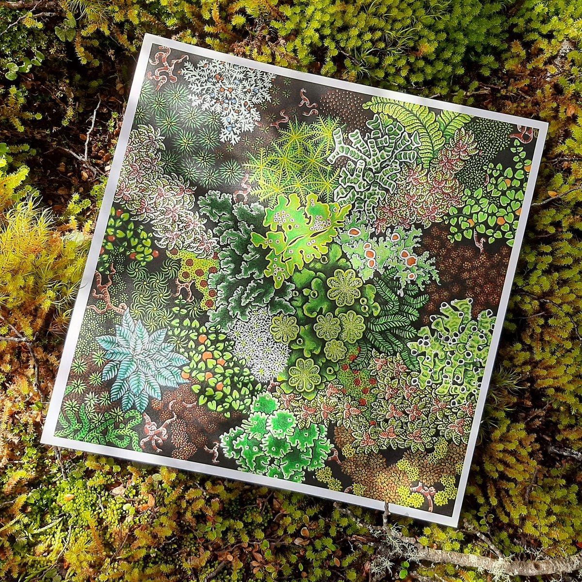 'Forest Floor' Print