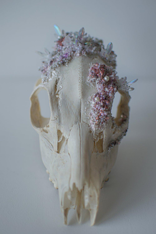 Image of Crystallized Skull #1