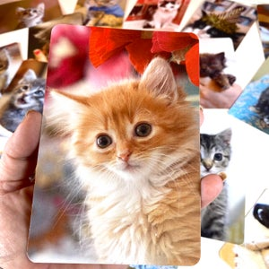 Mystery Kitty Postcard Mix -- Set of 15