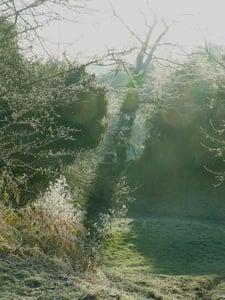 Image of Shadows- Alan Courtney
