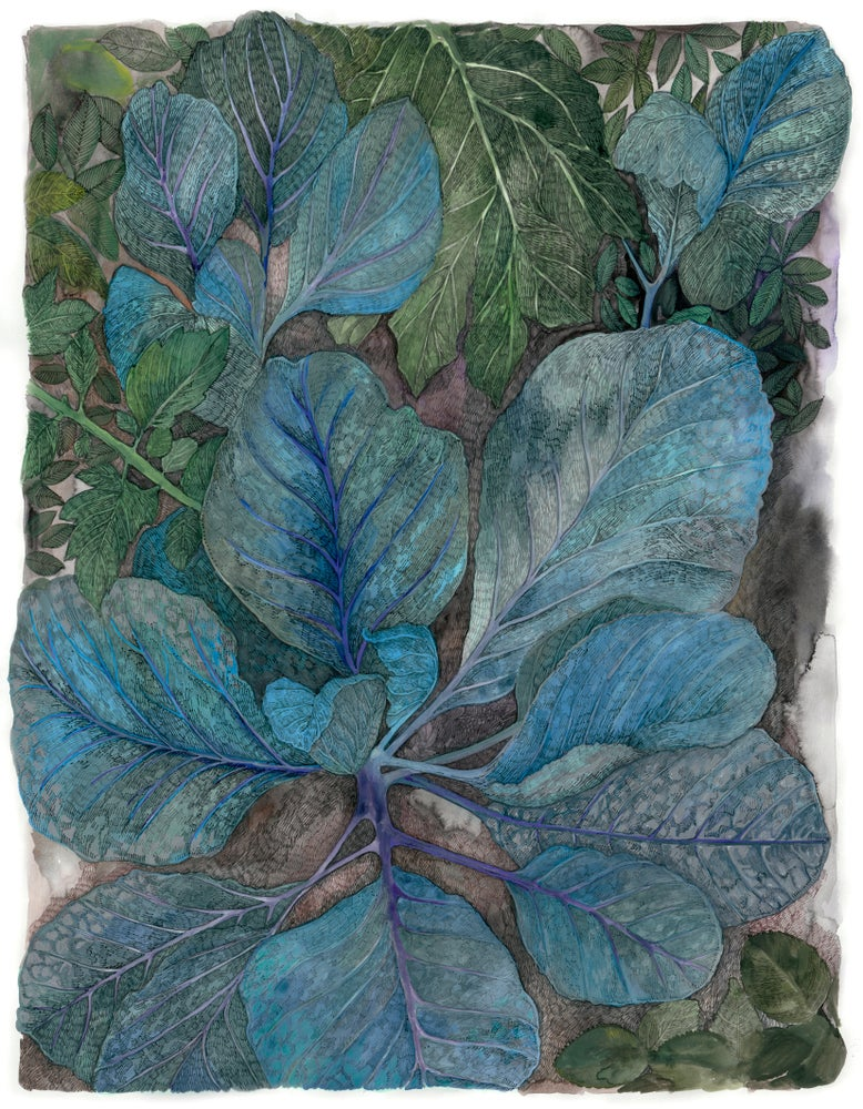 Image of Blue Cabbage