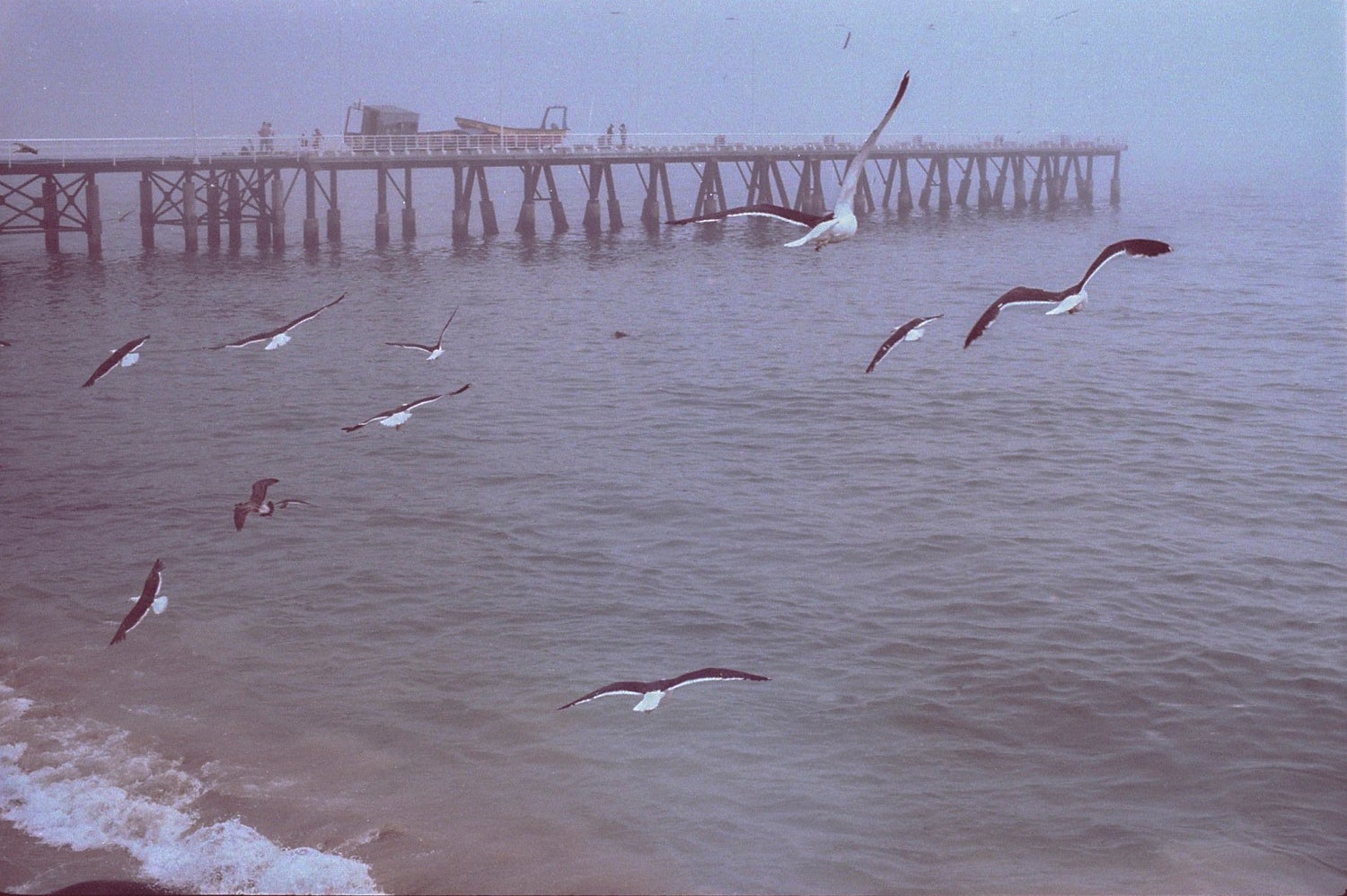 Image of Gaviotas