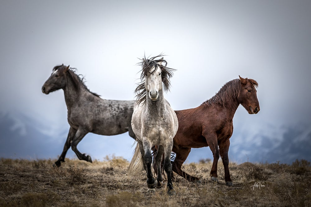 Image of Set of three 13x19 limited edition wild horse prints.