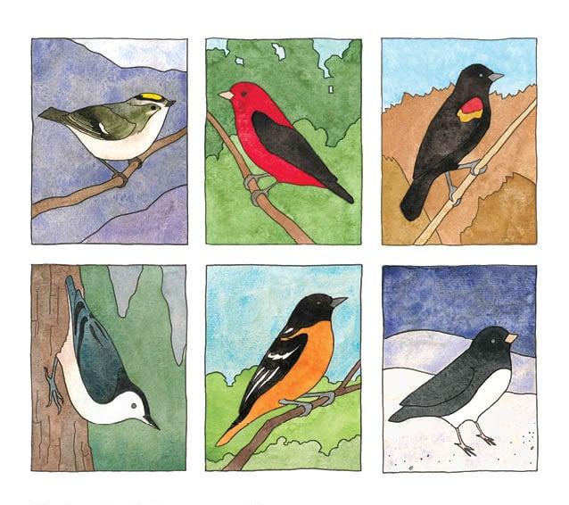 Image of Birds of All Seasons Card Set 5