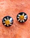 daisy domes