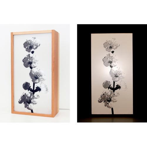 """Image of Leuchte I Lamp """"SPRING"""""""