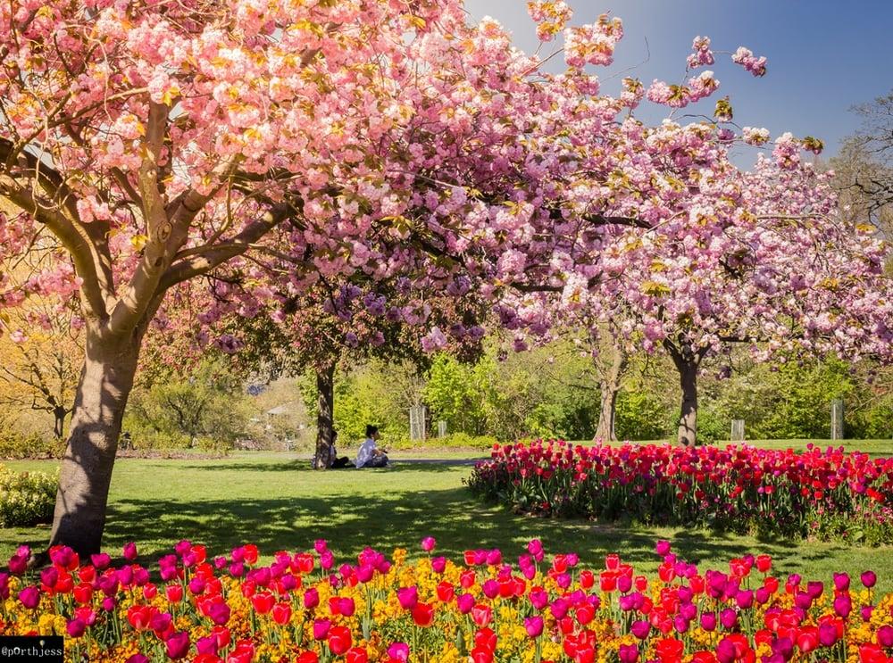 Image of Victoria Park (Spring) (ex-shop stock)