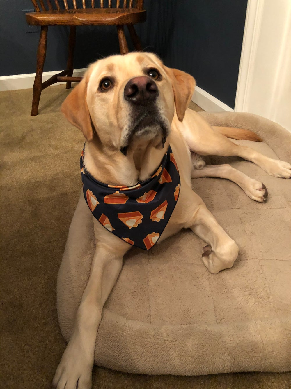 Pumpkin Pie Navy Dog Bandana