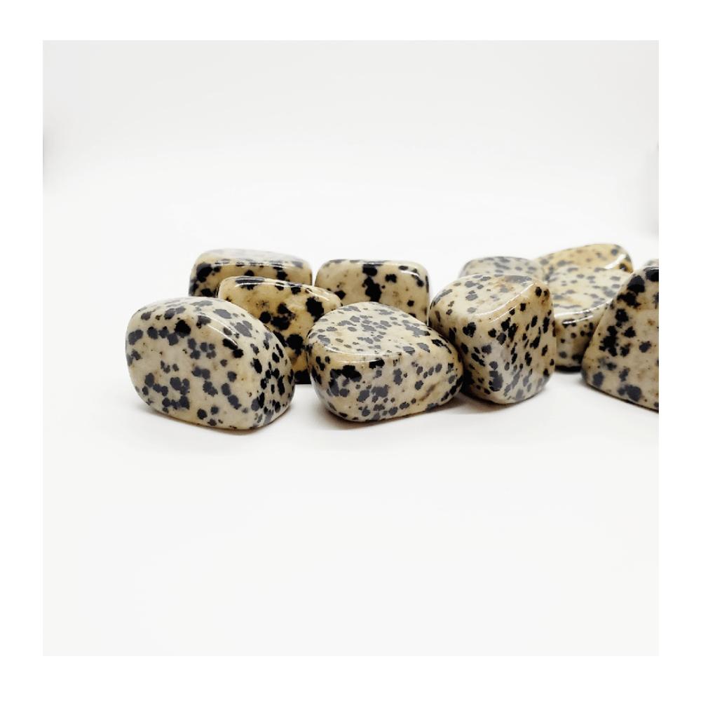 Image of Dalmatian Jasper