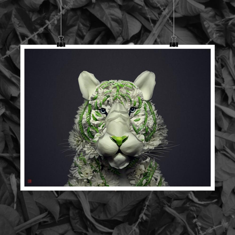 Image of White Tiger