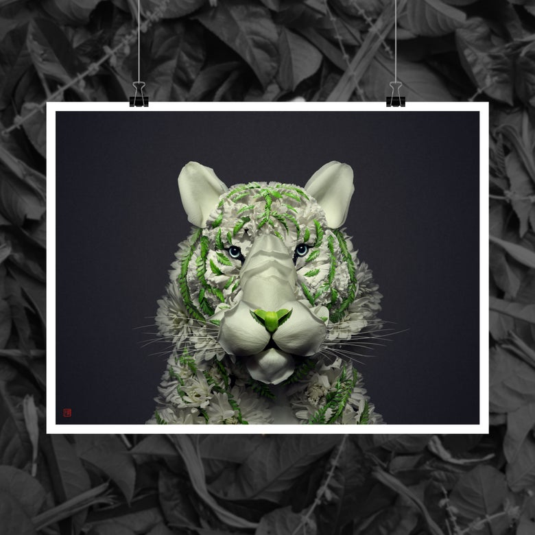 Image of White Tiger