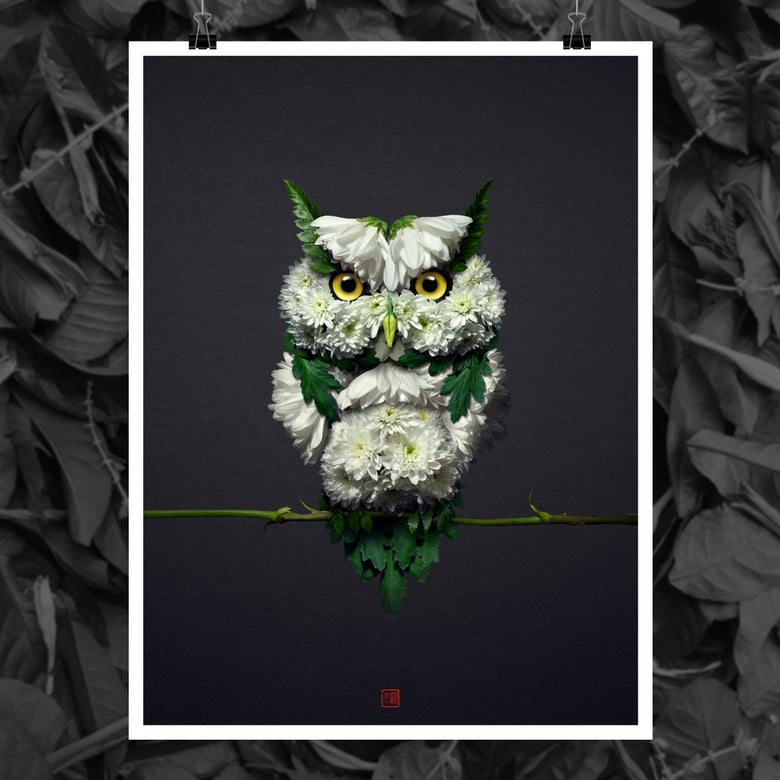 Image of White Owl