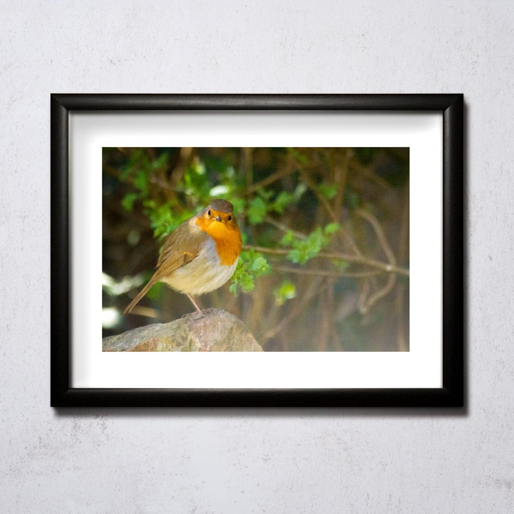 Image of Robin on a Rock A4/A3 print