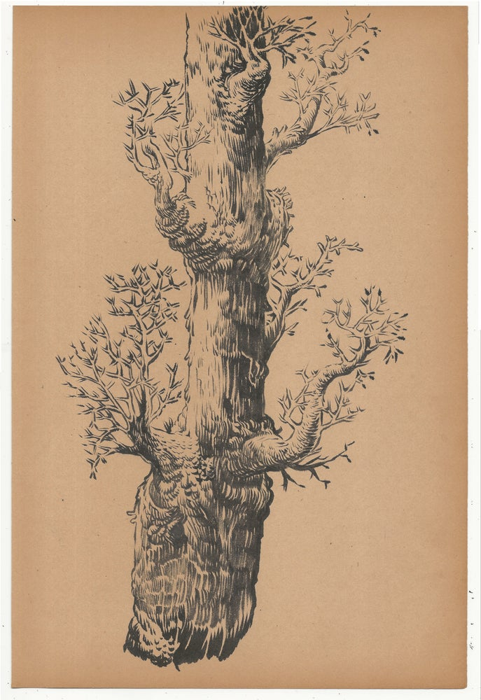 Image of Tree Drawing 1