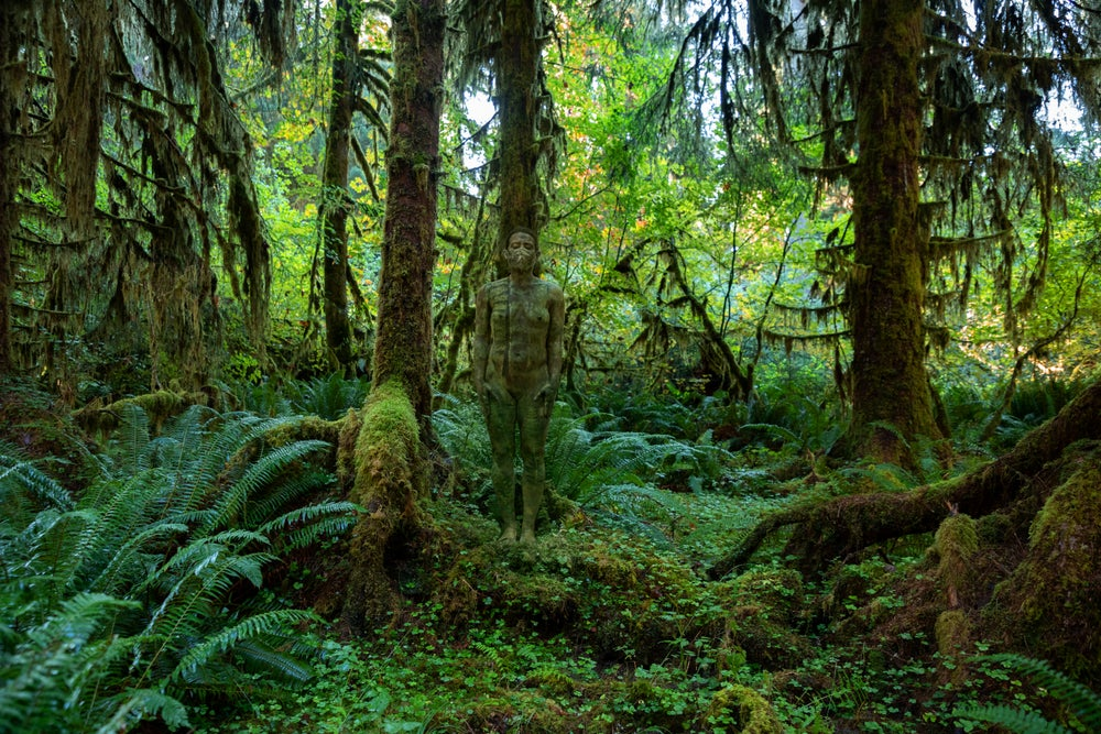 Image of Hoh Rainforest - Olympic National Park (National Park Series)