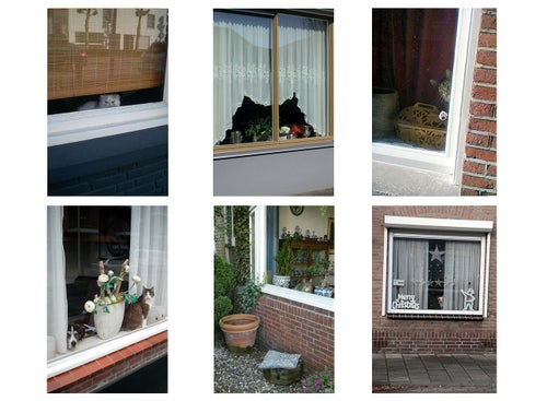 Image of 【Signed】Cats and Dogs in the Window #1-6 - edition