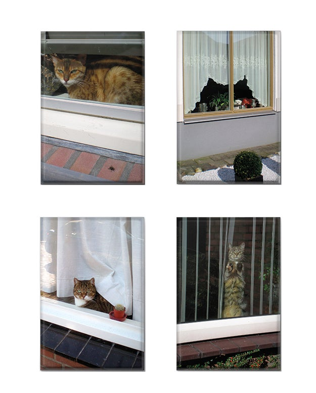 Image of Cats and Dogs in the Window - refrigerator magnet