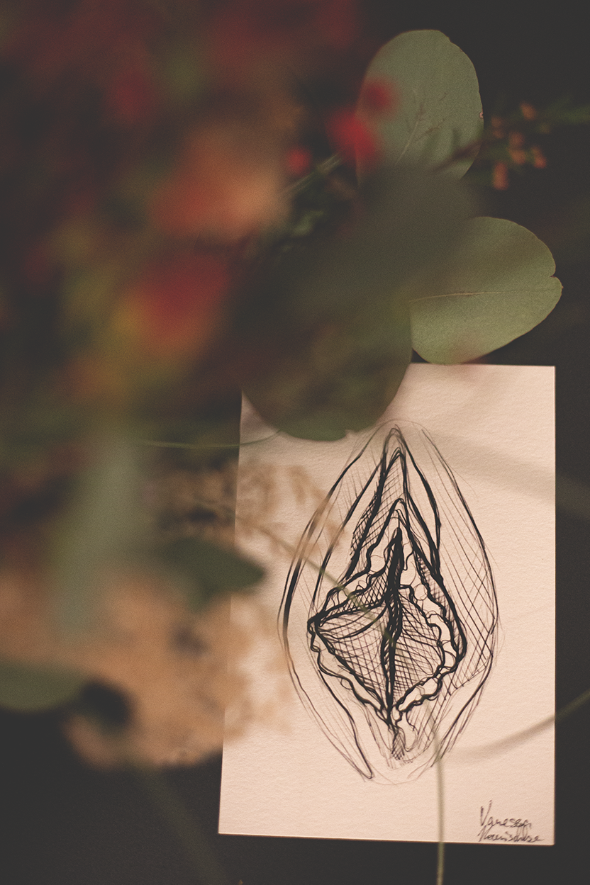 Image of Vulva