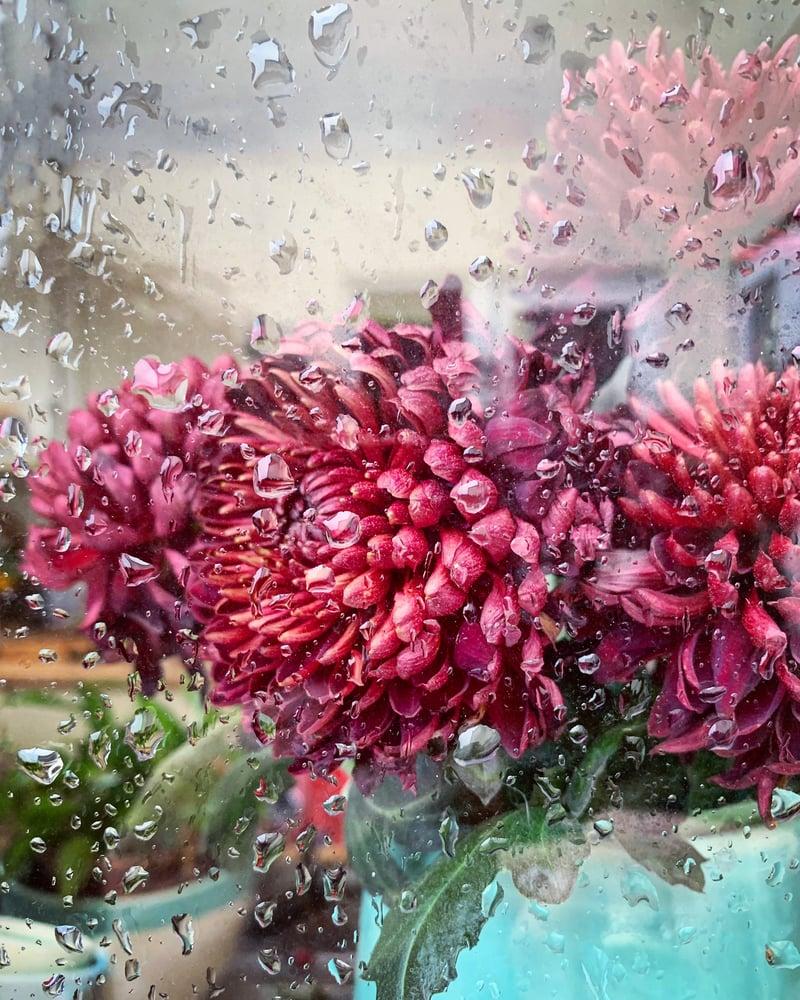 Image of 'Rainy Chrysanthemum'- LIMITD EDITION, SIGNED PRINT