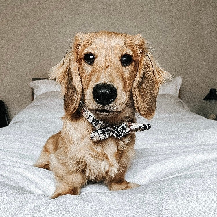 Image of Burberry bow