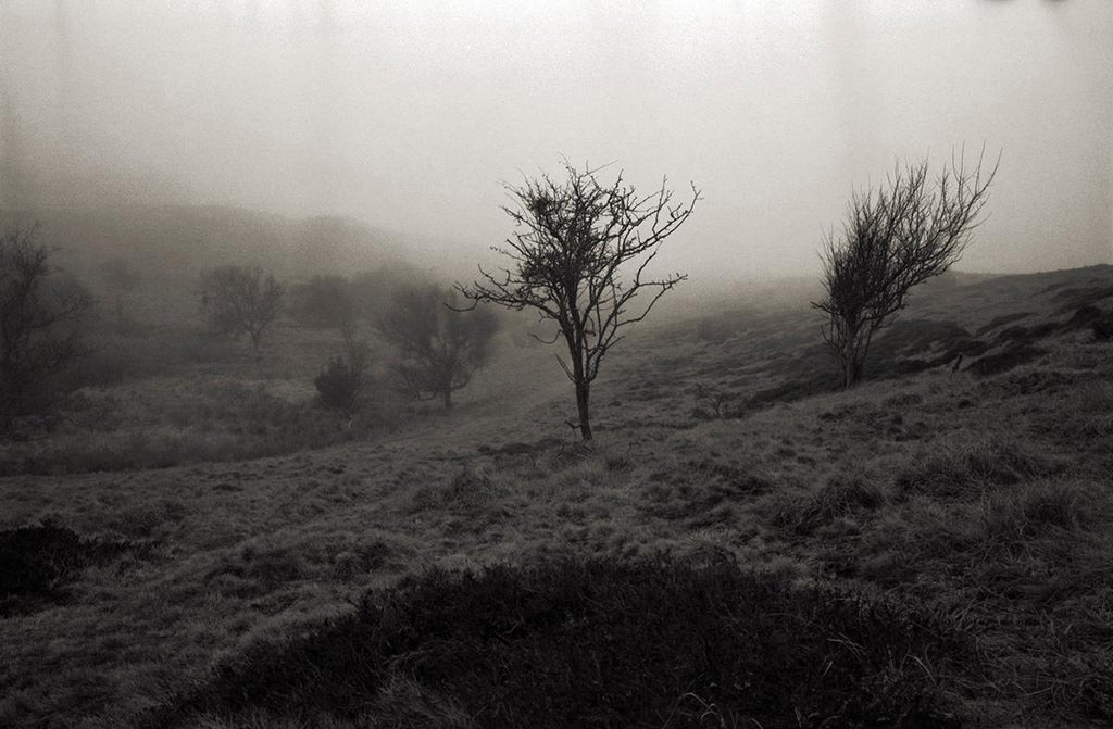 "Image of Artist Print. ""Heathers Hill 1"""
