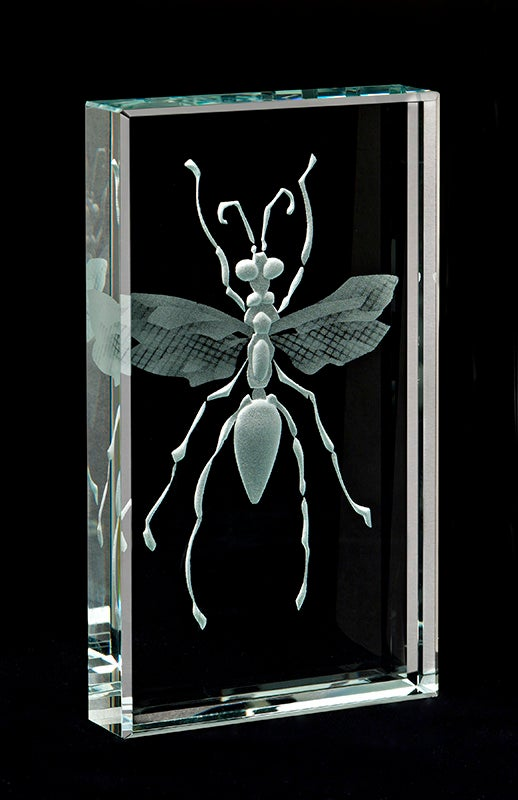 Image of Hunter Wasp Paperweights